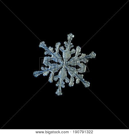 Snowflake isolated on black background. Macro photo of real snow crystal: small stellar dendrite with elegant shape, ornate arms and glossy surface. Snowflake photo taken in cold blue - gray light.