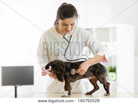 Veterinarian female doctor and dog at vet ambulance