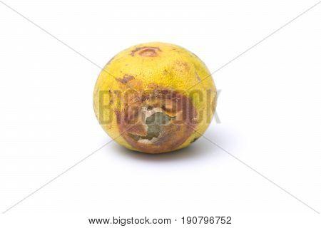One rotten lemon isolated on white background