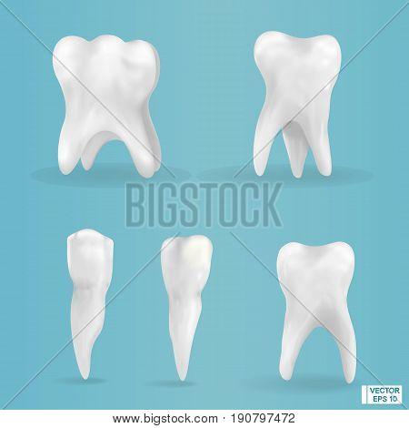 Set Of Photorealistic, 3D Teeth