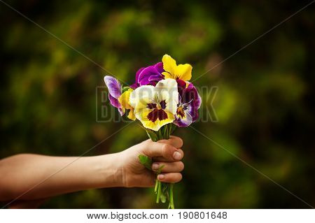 Child hand holding a bouquet pansies flower . Focus for flowers.