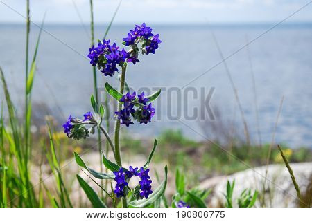 Blue summer flower with blurred water in the background