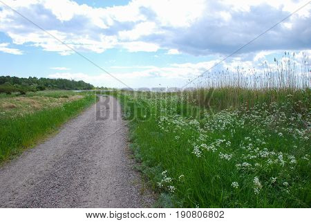 Gravel road along the coast of the swedish island Oland in the Baltic Sea