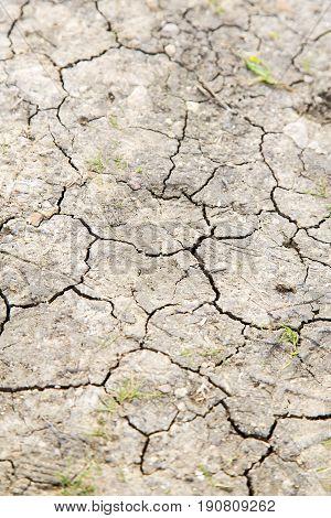 Brown Dry Sand   Sahara Desert Grass