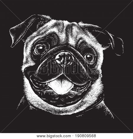 Black and white portrait sketch of a fawn pug's face. Vector illustration.