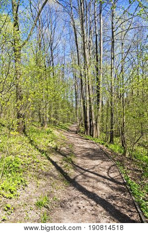 A Path In The Spring Forest.