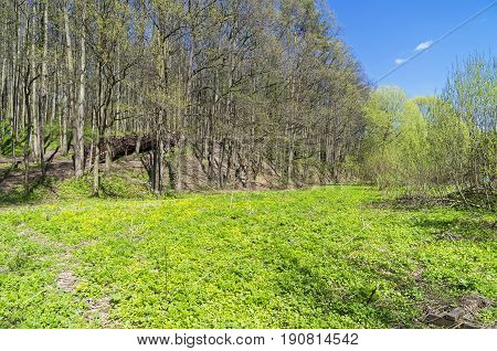 Meadow In The Valley Of The Stream In Spring.
