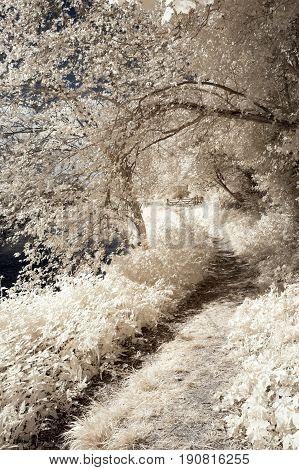 Surreal Vibrant Alternative Colour Infrared English Countryside Landscape