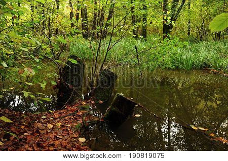 Dark swamp with trees and shrubs in deep forest