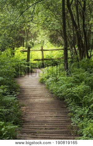 Beautiful Landscape Image Of Wooden Boardwalk Through Lush Green English Countryside Forest In Sprin
