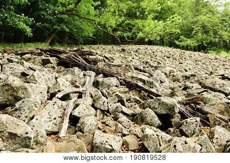 Sea of stones with moss surrounded by trees