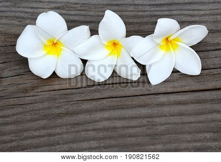 Frangipani flowers on wooden background with copy space.Plumeria flowers.Spa or aromatherapy concept.