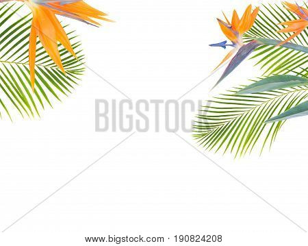 tropical flowers and leaves - resh strelizia bird of paradize flowers and exotic palm leaves isolated on white background
