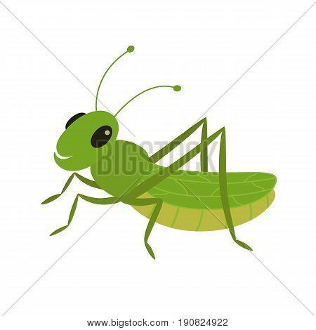 Green grasshopper on a white background vector Illustration