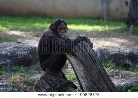 Monkeys in Israeli safari