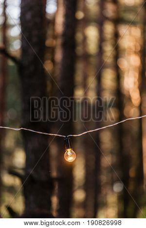 lamps on the tree