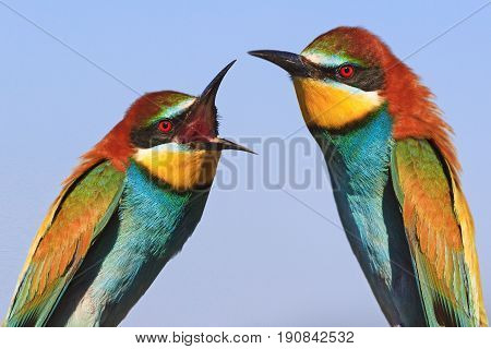 man and woman swear, family quarrel birds, bright colored birds
