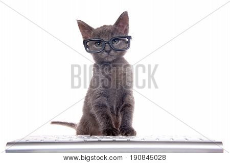Small dark gray kitten wearing black glasses sitting in front of computer keyboard paws on keys looking at viewer. Isolated on white background. Fun computer technology theme with kittens