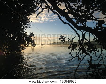 Looking through the mangrove tree on Kerikeri Inlet New Zealand NZ on a misty and foggy winter's morning