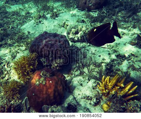 Corals and fish in clean water. Palawan