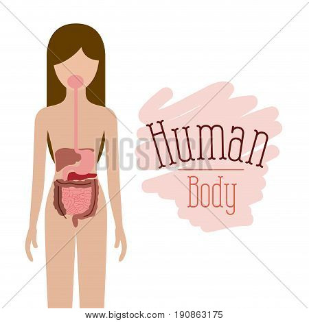 colorful silhouette female person with digestive system human body vector illustration