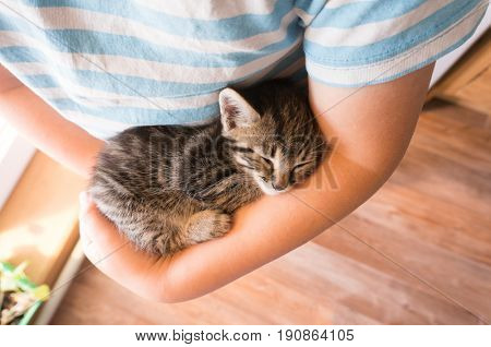 kitten slip on the arm of the boy outdoors.