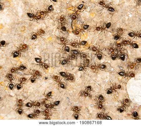 ants on the ground. close . A photo