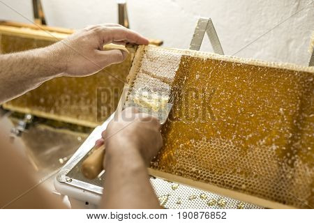 Honeycomb will open unwaxing fork beekeeper uncapped for harvest golden delicious honey closeup