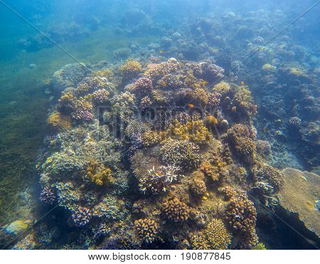 Underwater landscape with coral reef. Yellow coral with seaweed. Turquoise sea and tropical seabottom photo. Sea animals and plants. Exotic seashore. Marine inhabitants. Shallow sea water wild life