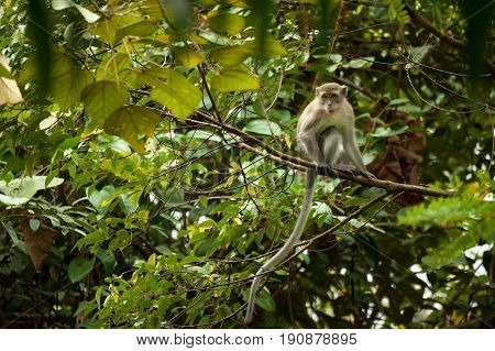 Monkeys checking for fleas and ticks on concrete fence in the park Thailand