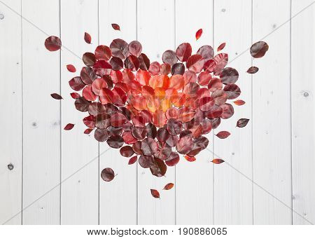 Bright red, vinous and orange autumn leaves lying flat on the white wooden background