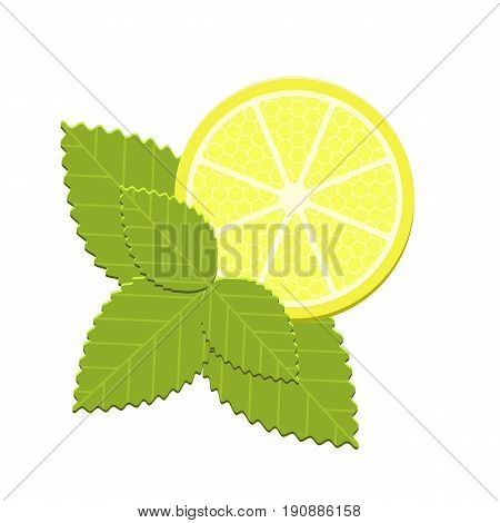Vector realistic mint and lemon isolated on white background. Flat icon of ingredients for fresh detox diet cocktail.