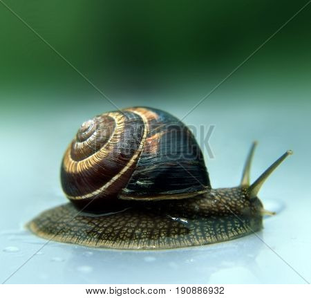 Beautiful snail crawls in the rain background, bad