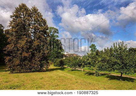 Lawn and fruit trees in park of Petrovskoe village. State Museum-reserve of A. S. Pushkin Pskov Region Russia.