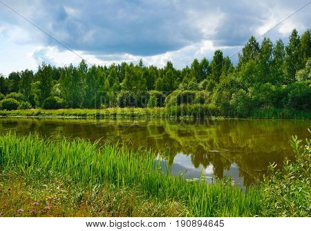 Summer landscape river and forest on coast