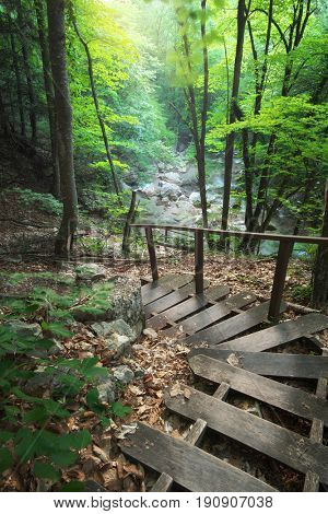 Stairs into the forest. Nature composition.