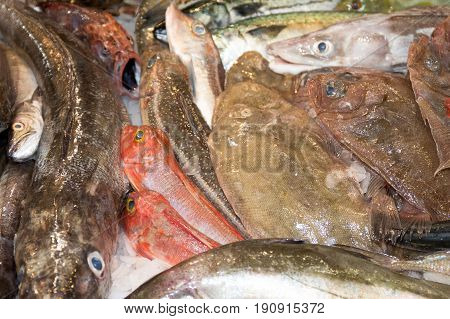 The Fresh catch of fish and seafood in shop