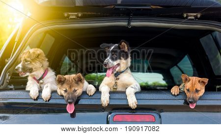 Litter of Puppies in pickup at morning