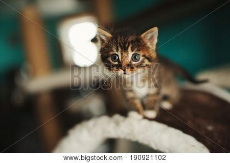 photo of cute little kitty with big eyes