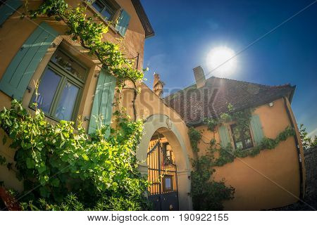 Abstract and sunny view to an overgrown house