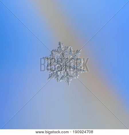 Real snowflake macro photo: stellar dendrite snow crystal with hexagonal symmetry, six elegant arms with side branches. Snowflake glitter in cold light on smooth blue - gray gradient background.