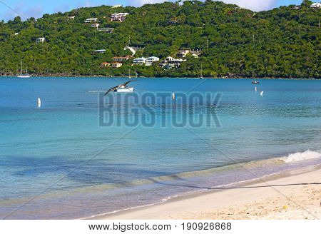 Calm sea surface with flying pelican at Magens Bay beach of St Thomas Island US VI. Palm shadow on the waters of Caribbean Sea and fishing boats in the early morning.