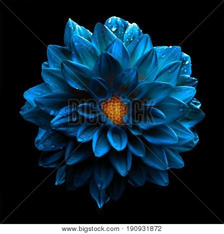 Surreal Dark Chrome Blue Flower Dahlia Macro Isolated On Black
