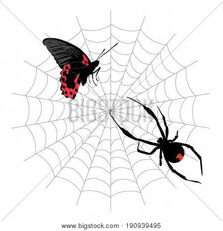 butterfly in the web and the poisonous black widow spider. vector illustration