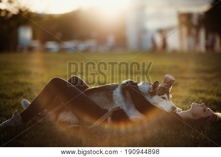 Beautiful young woman playing with funny husky dog outdoors in park at sunset  or sunrise