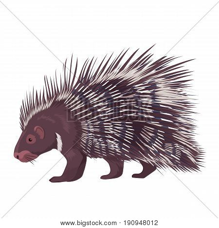 Vector illustration of porcupine isolated on a white background