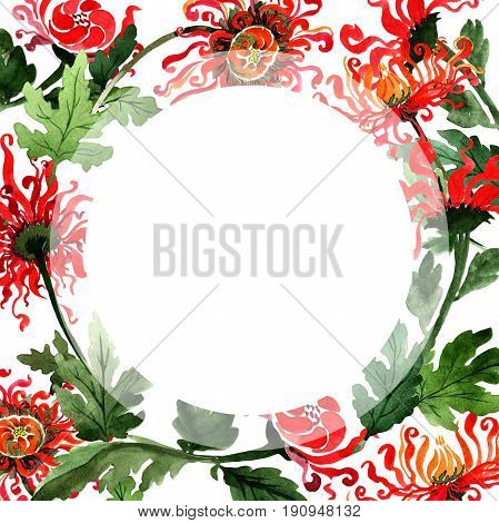 Wildflower chrysanthemum flower frame in a watercolor style isolated. Full name of the plant: Chinese chrysanthemum. Aquarelle wild flower for background, texture, wrapper pattern, frame or border.