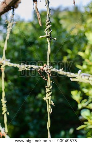 Barbed wire on fence to feel worrying.