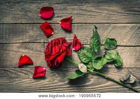 Withered rose on wooden background, Rose petals