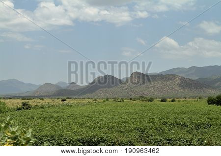 The Fields and meadow landscapes in Ethiopia